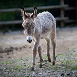 donkey-foals-1401043-m